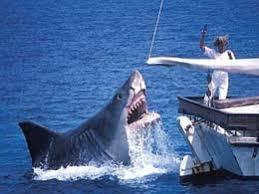 shark attack on humans. Contemporary Humans Humans Behind Rising Shark Attacks Says Experts On Shark Attack K