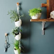 5 indoor herb garden tips to dazzle your