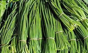 Resultado de imagen para sembradio de cebollin