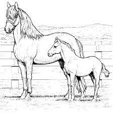 Gratis Kleurplaten Paarden Brekelmansadviesgroep