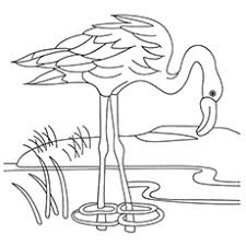 flamingo coloring pictures. Delighful Pictures Flamingo Coloring Pages  A Drinking Water From The Lake Intended Pictures E