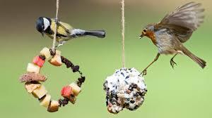 make a bird feeder cbeebies bbc