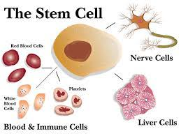 stem cell research expository essay samples and examples stem cell a nobel prize in physiology or medicine is awarded to researchers who manage to make revolutionary or significant discoveries in their fields