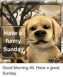 funny memes and good morning have a funny sunday good morning all