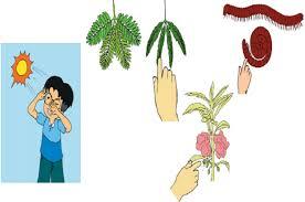 We did not find results for: Apa Makanan Untuk Tumbuhan Kunci Jawaban Halaman 14 Tema 1 Kelas 3 Sd Mi Subtema 1 Ciri Ciri Makhluk Hidup Jatim Network