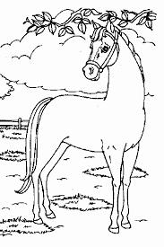 Paarden Kleurplaten Met Betrekking Tot Paarden Tekening My Blog