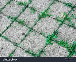 Grass background tile Family Ground With Grass Pavement Sidewalk Tile Background Pavement Tile Top View Closeup Exposed Concrete Block Floor With Grass Concrete Pavement Pattern Freepik Ground Grass Pavement Sidewalk Tile Background Stock Photo edit Now