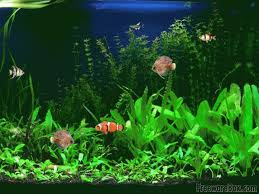 small screenshot 1 office fish. free animated screensavers with sound screenshot of aquarium fish screensaver small 1 office h