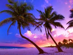 Exotic Wallpapers on HipWallpaper ...