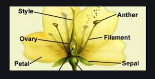 the flower concise icse cl 9