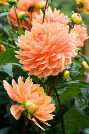 most beautiful flowers in the world