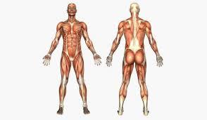 Body Injury Chart Male Female Body Injury Chart 324 Secretos Cuerpo Humano 02