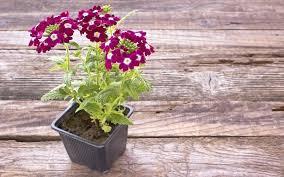 full size of small hanging baskets for blue flowers basket white brackets best plants garden