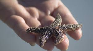 of starfish and kittens the creative cat it makes a big difference to this starfish