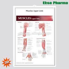 3d Medical Human Anatomy Wall Charts Poster Muscles Upper Limb Buy 3d Chart Human Anatomy Wall Poster Muscles Upper Limb Product On
