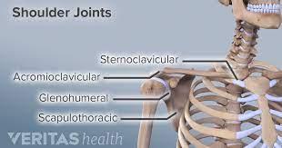 Behind the neck shoulder press. Shoulder Joint Structure