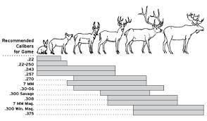 Whitetail Deer Size Chart Rifle Ammunition Bullets Texas Parks Wildlife Department