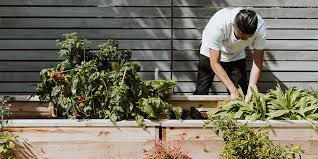 how to start a veggie garden at home