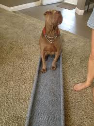 diy dog ramp how to build a ramp for
