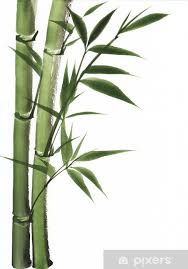 watercolor painting of bamboo vinyl wall mural styles