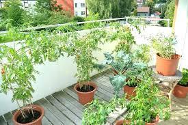 large outdoor flower pots outdoor plants in pots ideas large outdoor plant pots large size of large outdoor flower pots