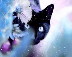 black cat with blue eyes anime. Cats Blue Eyes Animals Black Cat Wallpaper Wwwanimalhicom Inside With Anime