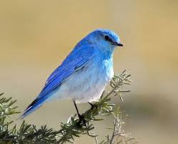 Image result for pictures of birds