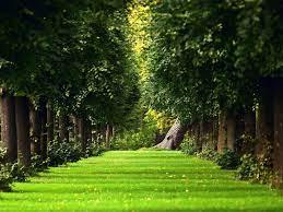 Green Garden Wallpapers Group (74+)