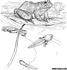 Small Picture Reptile Coloring Pages by YUCKLES
