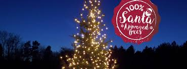 132 Best A Very Sherwood Forest Christmas Trees