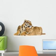 lion cub and tiger wall mural by wallmonkeys l and stick graphic wm290005 18 w x 11 h small fot 6094602 18
