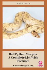 Ball Python Morph Chart Ball Python Morphs A Complete List With Pictures Embora Pets