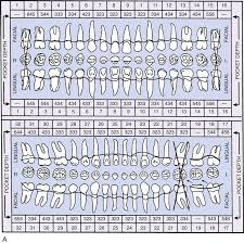 24 Periodontics Pocket Dentistry