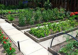 how to set up a vegetable garden bed great raised vegetable garden bo stacked herb garden