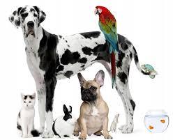 best pets wallpapers in high quality jasper hazelwood 168 35 kb