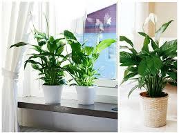 bathroom ~ English Ivy1 With Regard To Bathroom Plants Natural ...