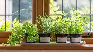 indoor herb garden ideas. Indoor Herb Garden Ideas S