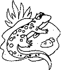Small Picture Lizards coloring pages