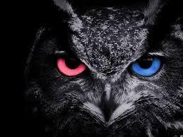 Black Owl Wallpapers - Wallpaper Cave