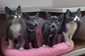 newborn gray kittens. Unique Gray Kitten Nurseryflash 15cameramake NIKON CORPORATIONheight 695orientation  1camerasoftware Adobe Photoshop CS6 Originaldate 952014 31410 AMwidth  And Newborn Gray Kittens H