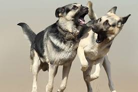 tip 1 neuter your dogs male dogs siblings or not are more aggressive when they re intact neutering not only removes the motivation to fight over