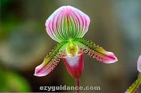 Ho un'orchidea attualmente in fiore, sul colletto si stanno iniziando a formare dei piccoli puntini neri che temo possano essere l'inizio di un orchidee con foglie gialle e macchie marroni: La Guida Totale Alla Crescita Di Bellissime Orchidee It Ezyguidance Com