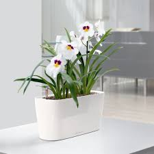 decorations  lechuza classico selfwatering polypropylene indoor