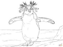 Northern Rockhopper Penguin Coloring Page Outline Drawing 5 Cute