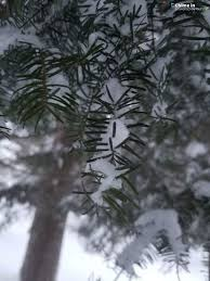 More snow & wind coming | WPBN