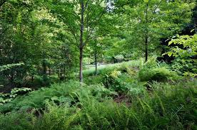 Small Picture An award winning woodland rain garden designed by Jeffrey Carbo