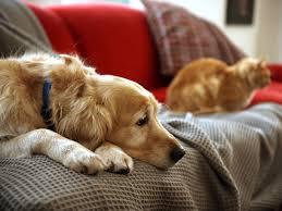 Wie Haustiere Trauern Leiden Hunde Und Katzen Gleich Stark