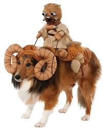 the best small dog costumes ideas on wiener dogs