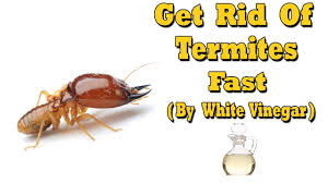 How To Get Rid Of Termites Fast (By White Vinegar)