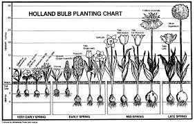 How To Identify Bulbs Garden Bulbs Planting Bulbs Bulb